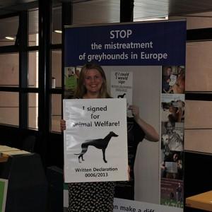 greyhound-campaign